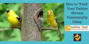 Bright yellow birds eating at a pole feeder symbolizing feeding your Twitter bird