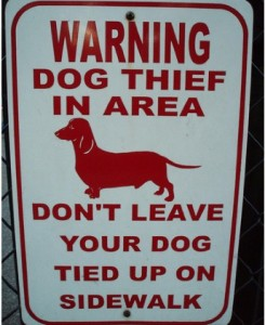 Warning Dog Thief Area ~ Don't Leave Your Dog Tied Up On Sidewalk